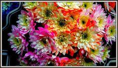 Florescenza