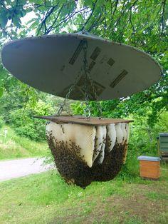 a4e8bd577424767101fae00ac2ff2f47--bee-hives-tank.jpg