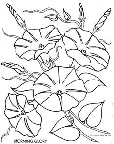 Morning Glory Flower Drawings Top aster tattoo outline images for . Embroidery Transfers, Embroidery Patterns, Hand Embroidery, Flower Embroidery, Flower Coloring Pages, Colouring Pages, Morning Glory Flowers, Motif Floral, To Color