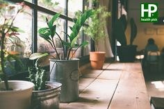 Indoor Plants That Can Actually Purify the Air in Your Home These household plants are all NASA scientist-approved for helping clear airborne toxins.These household plants are all NASA scientist-approved for helping clear airborne toxins. Small Potted Plants, Cool Plants, Ficus, Suculentas Interior, Indoor Plants Clean Air, Deco Jungle, Luz Solar, Household Plants, Office Plants