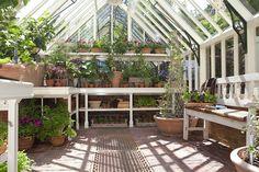 Alitex greenhouse at Chelsea