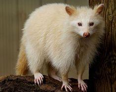 21 Amazing Albino Animals