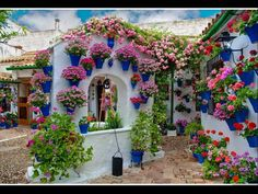 flowers up the wall