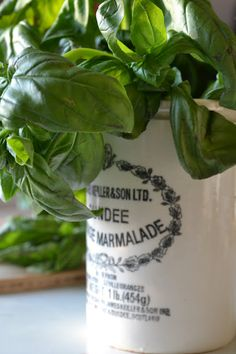 Love basil. Love old marmalade jars.