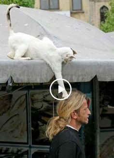 Animals Discover Video Funny Cats and Kittens Meowing Compilation - Funny Cats And Dogs Cats And Kittens Cute Cats Funny Pets Kitty Cats Funny Kittens Funny Humor Cat And Dog Videos Funny Animal Videos Animals And Pets, Baby Animals, Funny Animals, Cute Animals, Funny Cats And Dogs, Cats And Kittens, Cute Cats, Funny Pets, Kitty Cats