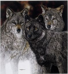 "Artwork ""Silent Spring"" features three adult wolves-the alpha male and female and one wolf who, in cooperation with the entire pack, shares in the responsibility of caring for the precious pups. Wolf Tattoos, Life Tattoos, Bev Doolittle, Wolf Eyes, Southwestern Art, Fox Art, Watercolor Techniques, Wildlife Art, My Animal"