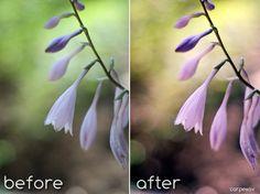 Spring Fever-Photoshop Action by CarpeSav.deviantart.com on @DeviantArt