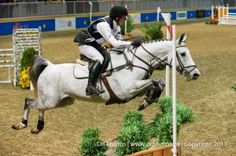 Horse show at the Royal WInter Fair  Equestrian Horse Equine Indoor Eventing Cross Country Grey