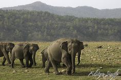 Elephant herd on the move - Flickr - Photo Sharing!