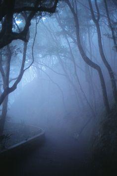 *Through the fog (byKevin Tadge / Laura Lamp)