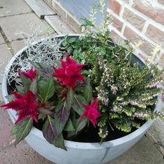 Bloempot met najaars/winterplanten