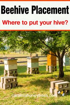 Beehive Placement - Where to Place a Beehive - Backyard Beekeeping Honey Bee Hives, Honey Bees, Bee Facts, Bee Hive Plans, Buzz Bee, Backyard Beekeeping, Homestead Farm, Bee Friendly, Farms Living
