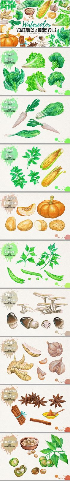 """Check out my @Behance project: """"Watercolor Vegetables, Herbs, Green"""" https://www.behance.net/gallery/46309859/Watercolor-Vegetables-Herbs-Green"""