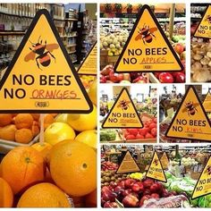 """Do beware all the pins with the """"kill everything"""" bug destroyers. The world NEED. - Bienen und Ideen - Welcome Haar Design Save Planet Earth, Save Our Earth, Our Planet, Save The Planet, Earth Day, Wall E, Save The Bees, Faith In Humanity, Bee Keeping"""
