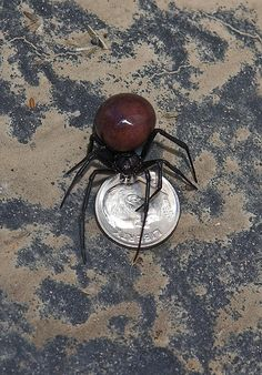 Nice Black Widow Spider photos   Big Bob's Big Bug Blog-Image by Peter Baer One of the largest black widow spiders I've ever come across. dime placed purely to show scale.