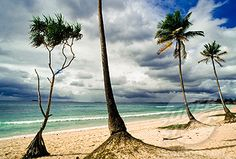Oyster Bay, Tanzania