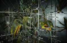 Azuma Makoto, Sogetsu Ikebana, Flower Installation, Urban Nature, Plant Art, Art Of Living, Art World, Science Nature, Planting Flowers