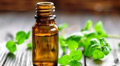 Essential Oils are used by millions of people for all sorts of ailments. One of them that is really popular is peppermint oil! We've got 8 every day uses for peppermint oil (which you may not even realize). Essential Oils For Nausea, Basil Essential Oil, Eucalyptus Essential Oil, Best Essential Oils, Essential Oil Blends, Eucalyptus Oil, Homeopathic Remedies, Home Remedies, Health Remedies