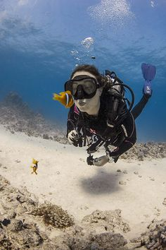 The best content from the diving world and the Deepblu network, hand-picked by Deepblu staff. Underwater Photos, Underwater World, Underwater Photography, Marinha Wallpaper, Scuba Diving Gear, Cave Diving, Scuba Girl, Marine Biology, Sea And Ocean