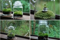 make a tiny garden in a jar with the kiddos. I have always wanted to make one of these!