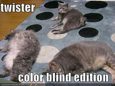 funny cat pictures with captions | Funny Gag Gifts: Funny Cat Photos, Even Funnier Captions