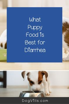 What puppy food is best for diarrhea?That question is far more common than you might think, especially considering the fact that puppies have sensitive tummies! Best Dog Food, Best Dogs, Puppy Food, Dog Food Recipes, Puppies, This Or That Questions, Cubs, Puppys, Pup