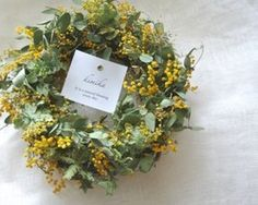 mimosa wreath.y