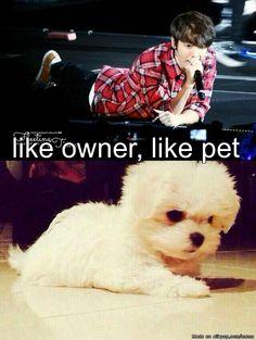 Oh Lee Donghae... Like owner, like pet.