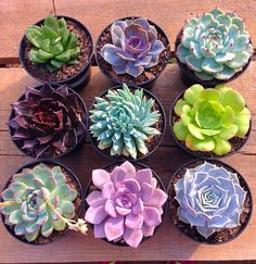 Plants Cactus Propagating Succulents Ideas For 2019 Propagating Succulents, Succulent Gardening, Cacti And Succulents, Planting Succulents, Cactus Plants, Garden Plants, Indoor Plants, House Plants, Planting Flowers