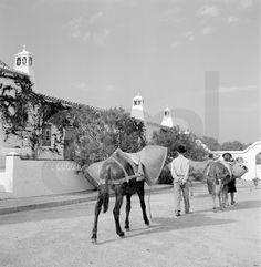 Ai mê rico Algarve!: Burros carregados
