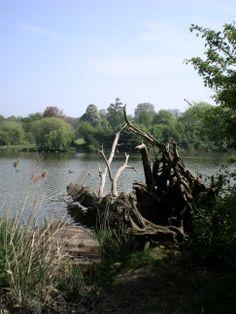 Mote Park Maidstone April 2011
