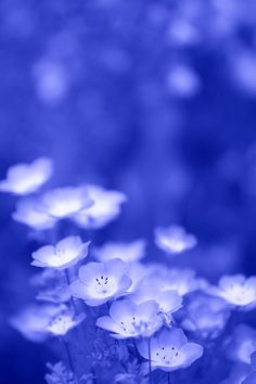 whats that stand for? just kidding! Blue Flowers, Wild Flowers, Beautiful Flowers, Blue Dream, Love Blue, Blue Aesthetic, Flower Wallpaper, Background Patterns, My Favorite Color