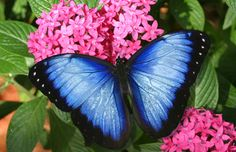 The blue butterfly. Color palette inspiration.
