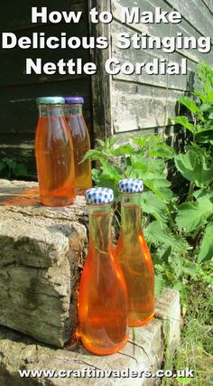 Nettles are a nutritious and versatile wild food. Here we make a delicious Stinging Nettle Cordial, one of my favourite nettle recipes. Sangria, Pavlova, Nettle Recipes, Herb Recipes, Jelly Recipes, Wine Recipes, Cordial Recipe, Tomato Nutrition, Wild Edibles