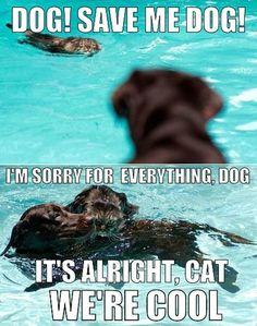 Dog!  Save me dog!  I'm sorry for everything dog.  It's alright cat, we're cool.