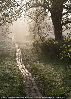 """""""Adam Burton captures A Frosty Morning in New Forest which was a finalist entry in the Breathing Spaces category and Carol Casselden's Orchard Path at Sunrise came third place in the Beautiful Gardens category"""""""