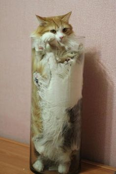 10+ Hilarious Photos That Prove Cats Are Basically Made Of Liquid! 😹 - Keep Meow