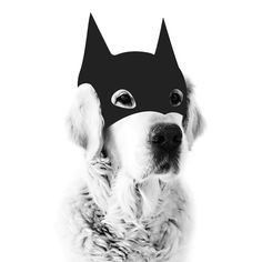 MY DEER | Bat Dog Print