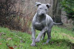Las 10 razas de perros más curiosas | Cuidar de tu perro es facilisimo.com
