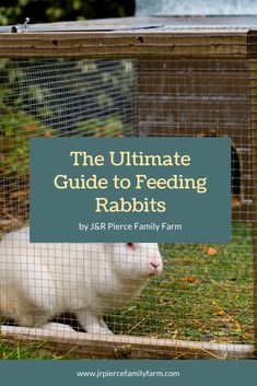 If you're thinking about raising rabbits, these helpful tips will teach you how to feed them. Raising Rabbits For Meat, Raising Farm Animals, Meat Rabbits, Organic Farming, Organic Gardening, Gardening Tips, Farm Projects, Urban Homesteading, Homestead Survival
