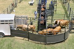 135 degree sweep is easily reversible so that cattle can be loaded from either side of the working alley, and can be expanded into a complete corral system with the purchase of additional pieces. Cattle Barn, Beef Cattle, Cattle Ranch, Cattle Dogs, Cattle Farming, Livestock, Types Of Cows, Cattle Corrals, Joker Poster