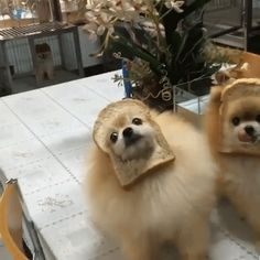 Inbread Dogs are Adorable