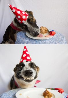 Humour Photos fun Un chien content de son anniversaire ! Animals And Pets, Funny Animals, Cute Animals, I Love Dogs, Cute Dogs, Animal Pictures, Funny Pictures, Dog Pictures, Funny Images