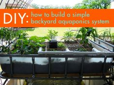 DIY: Everything You Need to Build a Simple Aquaponics System | Inhabitat - Sustainable Design Innovation, Eco Architecture, Green Building