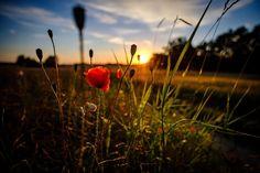 #sunset_perfection #sunset_pics #sunsetlover #sunset_ig #sunset #makowelove #jj_sunsetlovers #sunsets #sunset #fuji #fujilove #fujifeed #fujifilmxt2