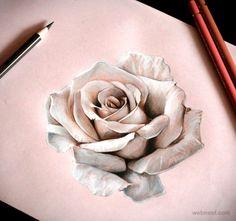desenho de rosa