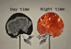 Brain activity day time night time