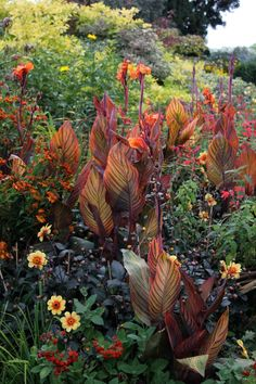 Canna Lily Landscaping, Tropical Landscaping, Landscaping Ideas, Tropical Garden Design, Tropical Plants, Tropical Gardens, Tropical Flowers, Canna Lily Garden, Exotic Flowers