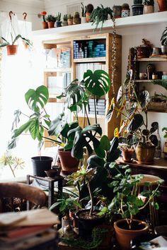 indoor plants, planters, hanging plants, clean air plants, cacti, cactus, succulents