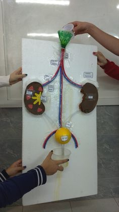 Education Discover 25 Body Parts Crafts - Early Childhood Education - Student On Body Preschool Preschool Curriculum Preschool Science Science Classroom Science Activities Preschool Activities Teaching Science Teaching Kids Biology Projects Biology Projects, School Science Projects, Stem Projects, Preschool Science, Science Education, Teaching Science, Science For Kids, Science Activities, Preschool Curriculum
